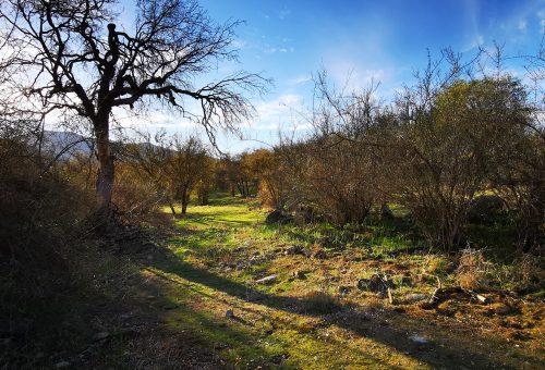 Loma Los Valles. Parcela semi plana Nº28