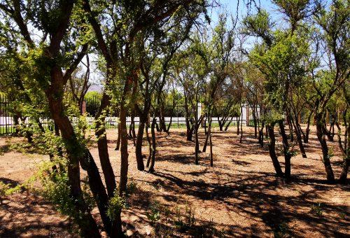 Loma Los Valles. Parcela plana Nº31