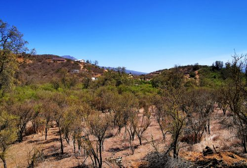 Loma Los Valles. Parcela semi plana Nº36
