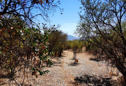 Loma Los Valles. Parcela plana Nº33