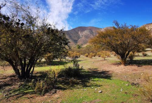 Parcela de 2 hectáreas plana en Hacienda Entrevalles 1